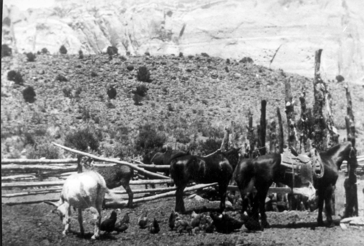 Life on the Floral Ranch. Teton Hanks Jackman collection.