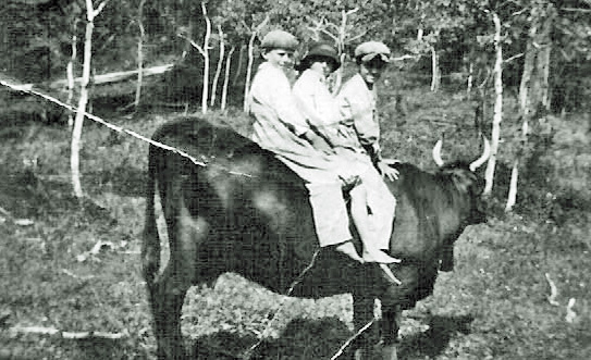 """Midge, Harvey & Larry on """"Old Sleepy"""" - the bull they rode on to gather up cows for milking"""